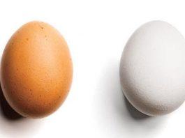 Ovo Branco ou Ovo Marrom: Qual é a Diferença e Qual Deles é Melhor?